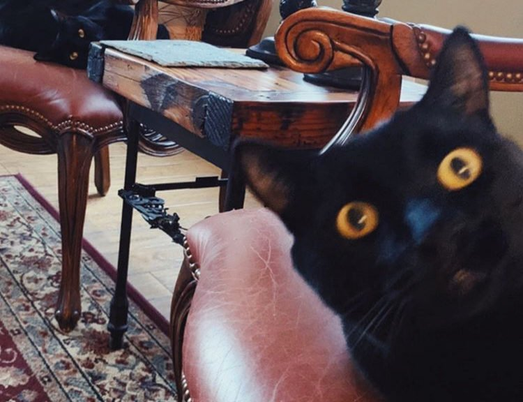 two black cats looking at camera